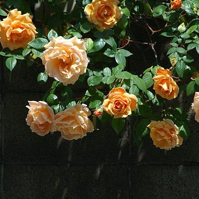 20070504-6.jpg