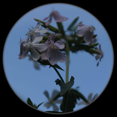 20080713_111.jpg