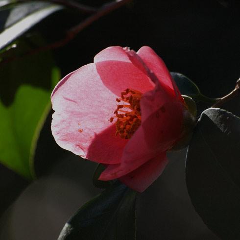 20100311_013.jpg
