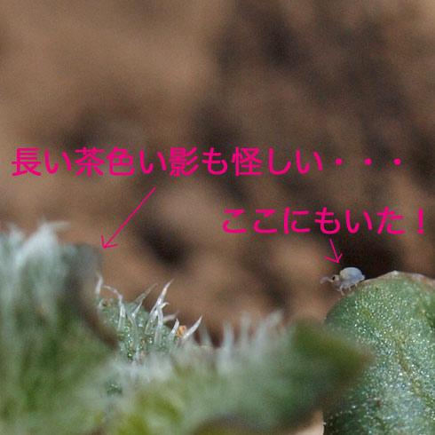 20100411_044_1.jpg