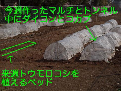 20100411_063.jpg
