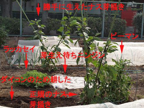 20100919_039.jpg