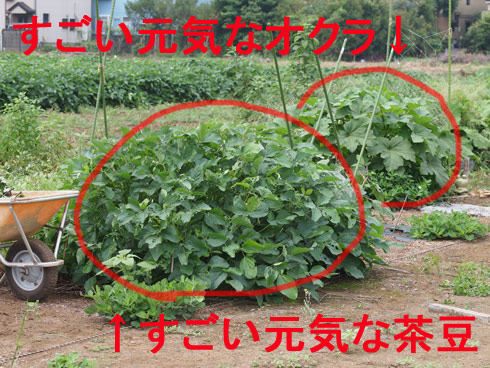 20110814_765.jpg