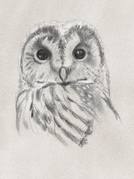 owl-sketch.jpg